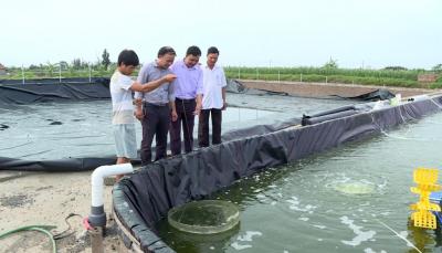Giải pháp quản lý môi trường ao tôm
